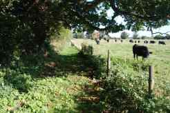 Route from Waterbeach Road to the Tithe Barn via Old Oak